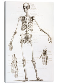 Canvas print  The Human Skeleton - Ken Welsh