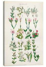 Canvas print  British wildflowers - Sowerby Collection