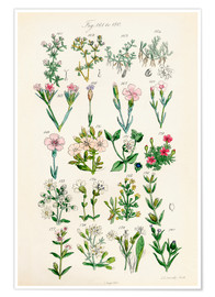 Premium poster British wildflowers