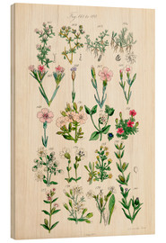 Wood print  British wildflowers - Ken Welsh