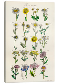 Canvas print  Wildflowers - Sowerby Collection