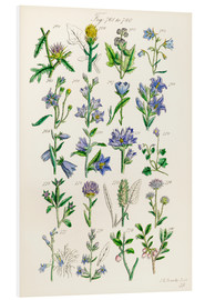 Ken Welsh - Wildflowers, Sowerby