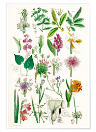 Premium poster  Wild Flowers - Sowerby Collection