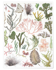 Premium poster  Water plants - Wunderkammer Collection