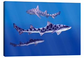 Canvas print  Leopard sharks - Don Hammond