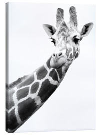 Canvas print  Giraffe in black and white - Darren Greenwood
