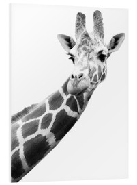 Foam board print  Giraffe in black and white - Darren Greenwood