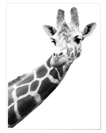 Premium poster  Giraffe in black and white - Darren Greenwood