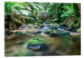 Acrylic print  River in the green rainforest of Tasmania, Australia - Matteo Colombo