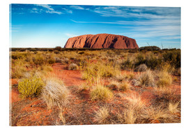 Acrylic print  Ayers Rock in the evening - Matteo Colombo