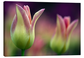 Canvas print  Two magenta tulips - Tony Sweet