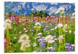 Acrylic print  Wildflower meadow - Craig Tuttle
