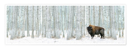 Premium poster  Buffalo Standing In Snow Among Poplar Trees - Richard Wear