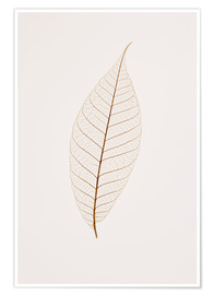 Premium poster Transparent Leaf
