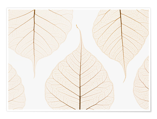 Premium poster Transparent leaves