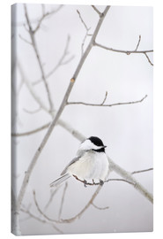 Canvas  Bird On A Branch - Richard Wear