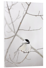 Foam board print  Bird on a branch - Richard Wear