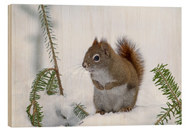 Wood print  Red squirrel - Philippe Henry