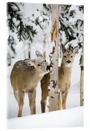 Acrylic print  Deers in a winter forest - Michael Interisano