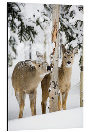 Aluminium print  Deers in a winter forest - Michael Interisano