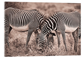 Acrylic print  Two Zebras Grazing Together - David DuChemin