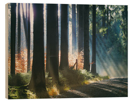 Wood print  Morning Light in the Forrest - Martina Cross