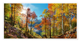 Premium poster Mountain forest in autumn