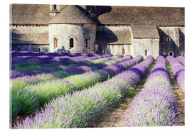 Acrylic glass  Famous Senanque abbey with its lavender field, Provence, France - Matteo Colombo