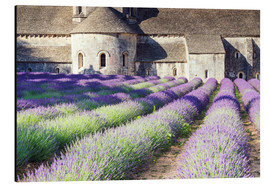 Aluminium print  Famous Senanque abbey with its lavender field, Provence, France - Matteo Colombo