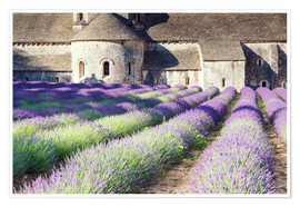 Premium poster  Famous Senanque abbey with its lavender field, Provence, France - Matteo Colombo