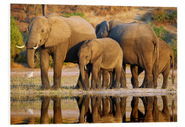 Forex  Elephants at a river, Africa wildlife - wiw