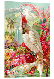 Acrylic print  Cocktail Cockatoo - Advertising Collection