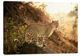 Canvas print  female Leopard at sunset - Jürgen Ritterbach