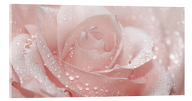 Acrylic glass  Rose with drops - Atteloi