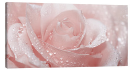 Canvas print  Rose with drops - Atteloi