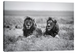 Canvas print  Two lion kings - Nicolás Merino