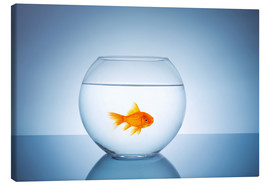 Canvas print  Fishbowl with goldfish - rclassen