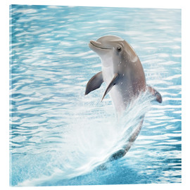 Acrylic glass  dolphin - Photoplace Creative