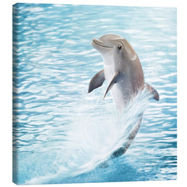 Canvas print  dolphin - Photoplace Creative