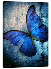 Canvas  butterfly - Mark Ashkenazi