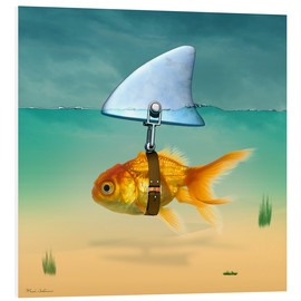 Foam board print  Goldfish - Mark Ashkenazi