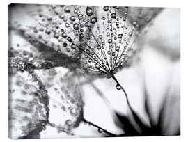 Canvas print  Dandelion Dew in Black and White - Julia Delgado
