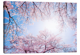 Canvas  pink cherry blossom in spring with backlight and blue sky - Jan Christopher Becke
