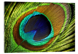 Acrylic print  Peacock feather - Mark Ashkenazi