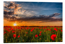 Acrylic print  Field of Poppies, Bavaria - Achim Thomae