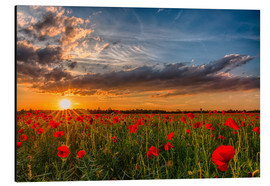 Aluminium print  Field of Poppies, Bavaria - Achim Thomae