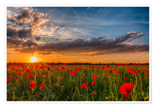 Premium poster Field of Poppies, Bavaria
