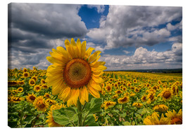 Canvas print  King of Sunflowers - Achim Thomae
