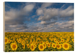 Wood print  Sea of Sunflowers - Achim Thomae