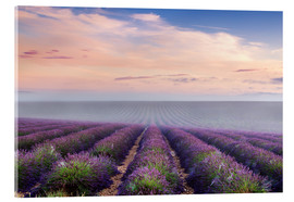 Acrylic print  Landscape: lavender field in summer at sunrise, Provence, France - Matteo Colombo